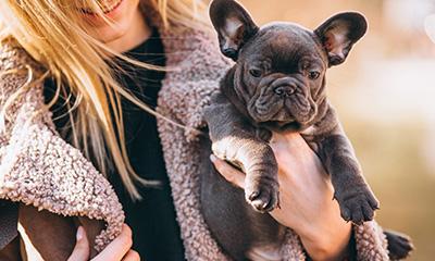 Girl holding french bulldog for pet insurance